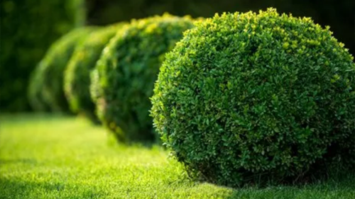 Hedge Cutting Services in Hull